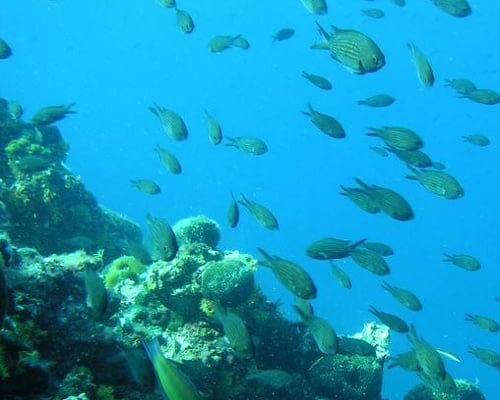 underwater worl of kornati catamaran rent croatia-catamaran holidays- catamarancity- catamaran hire-croatia catamaran- lagoon catamaran-sunreef catamaran-crewed catamaran-catamaran charter